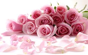 romance-pink-roses